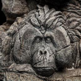 Photo du produit La Planète des singes statuette Apes Through the Ages 29 cm Photo 4